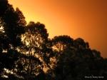 East Gippsland Fires 2014, Cann River, Emergency Relief Centre Cann River Victoria, Victoria, Australia, photos, oz nature shots, Emmy Silvius