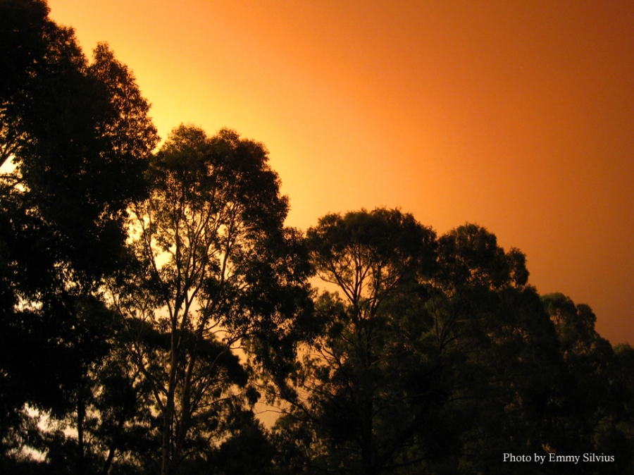 East Gippsland Fires 2014, Cann River, Emergency Relief Centre Cann River Victoria, Victoria, Australia, photos, oz nature shots, Emmy Silvius