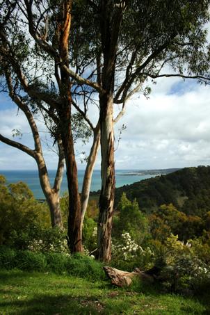 great ocean road victoria, victoria, sea, Skenes Creek, landscape, nature, Australia, photo, photography, oz nature shots, Emmy Silvius