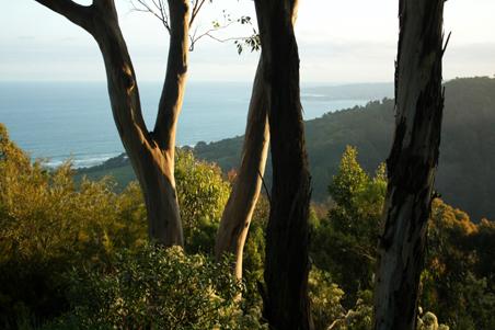 great ocean road victoria, Skenes Creek, victoria, sea, sunset, landscape, nature, Australia, photo, photography, oz nature shots, Emmy Silvius