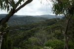Lorne victoria, victoria, hills, trees, landscape, nature, Australia, photo, photography, oz nature shots, Emmy Silvius