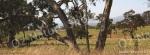 mug, drinking mug, Bonnie Doon, nature, Australia, photo, photography, oz nature shots