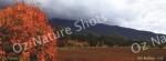 mug, drinking mug, porepunkah, mt buffalo, victoria, autumn, landscape, nature, Australia, photo, photography, oz nature shots, Emmy Silvius