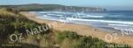 mug, drinking mug, phillip island, victoria, beach, sea, sand, landscape, nature, Australia, photo, photography, oz nature shots, Emmy Silvius