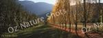 mug, drinking mug, porepunkah, victoria, autumn, trees, landscape, nature, Australia, photo, photography, oz nature shots, Emmy Silvius